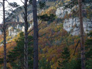 Bien-être et automne